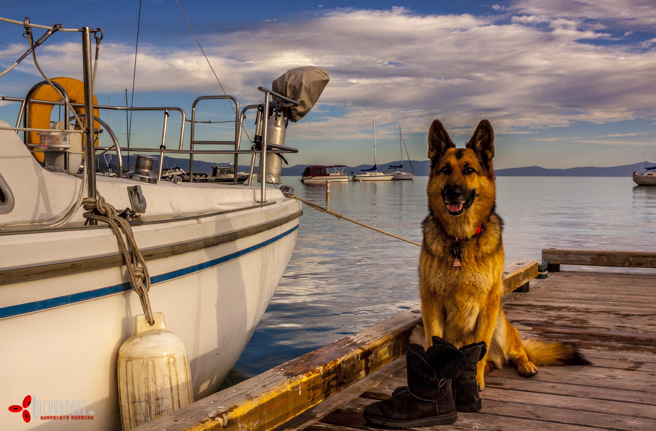 Domino guarding the sail boat.
