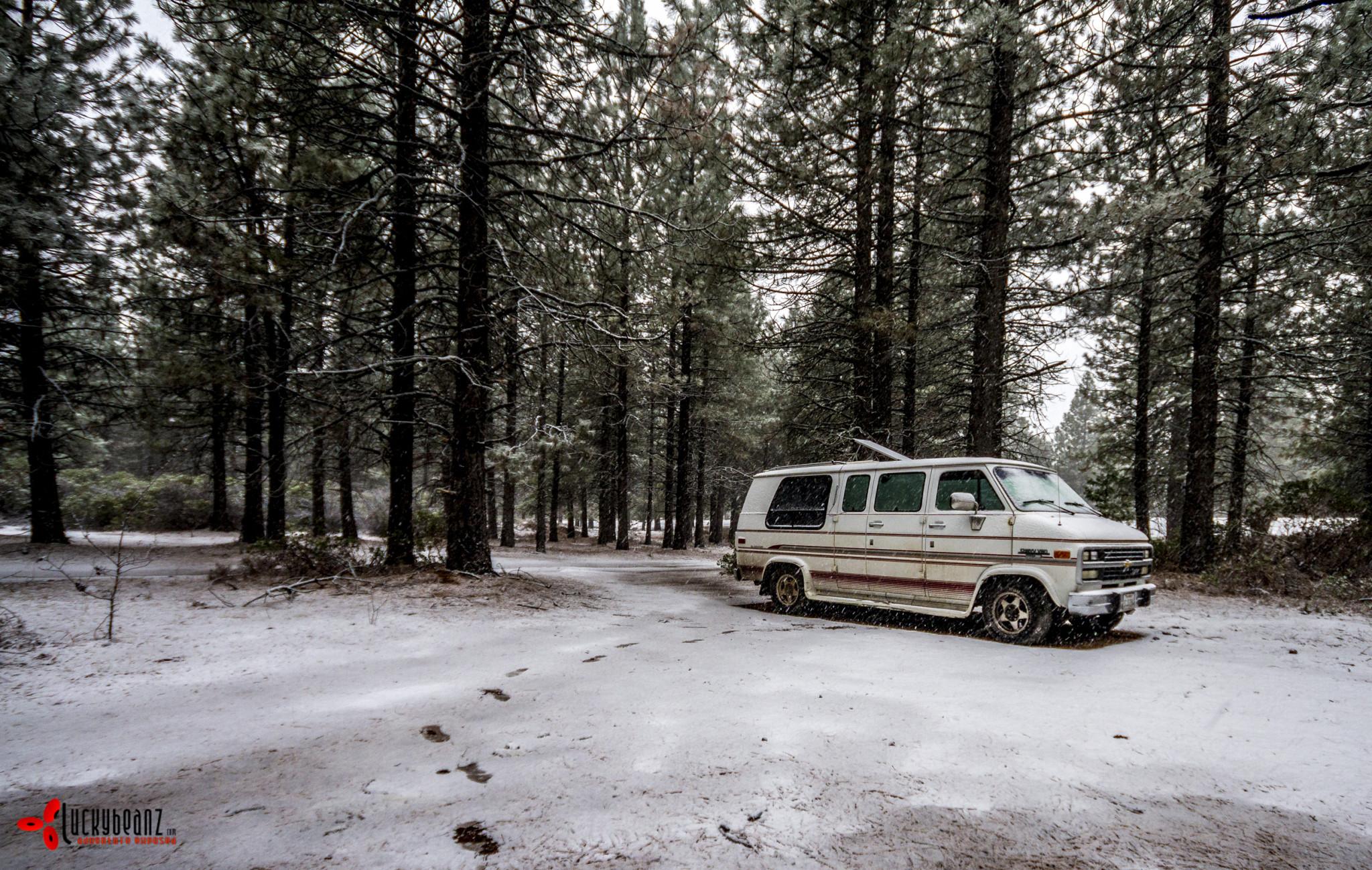 Snowy morning in Mt Shasta.