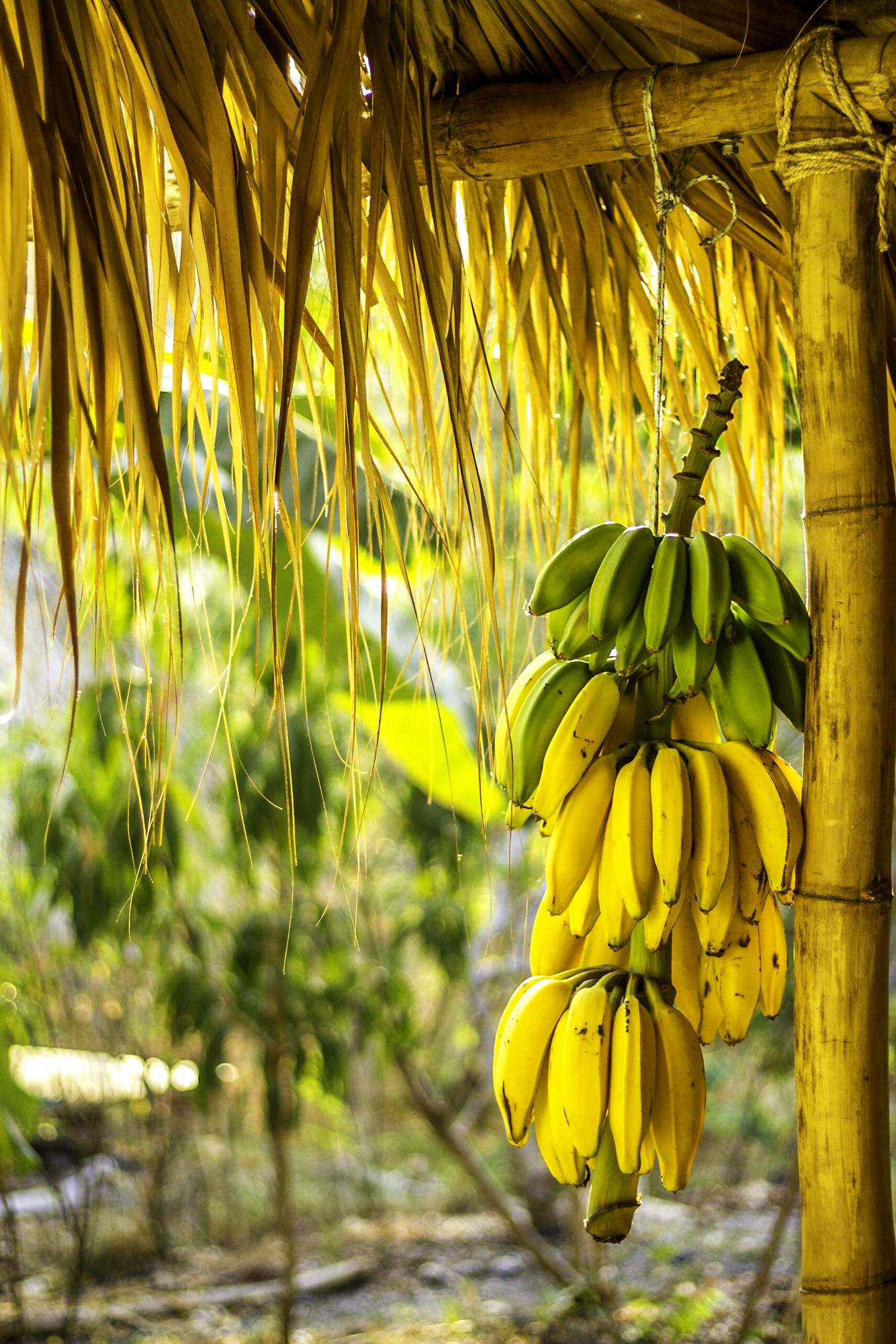 Bananas ready for a smoothie.